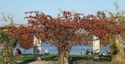 Parcul Herastrau, Insula Trandafirilor
