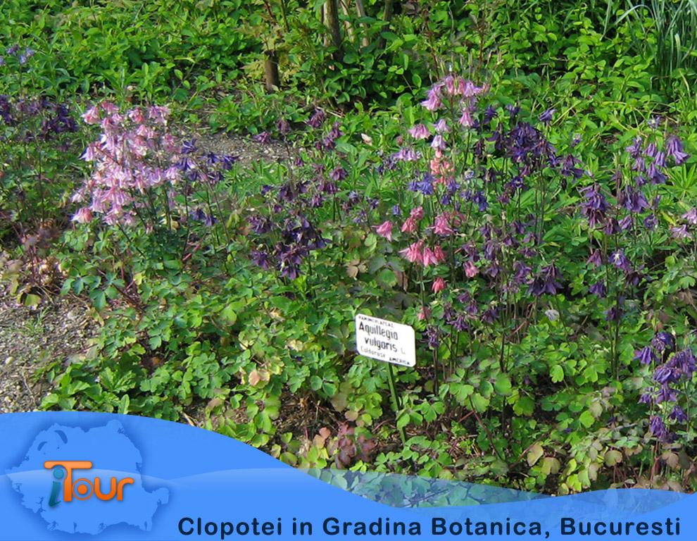 Clopotei in Gradina Botanica, Bucuresti
