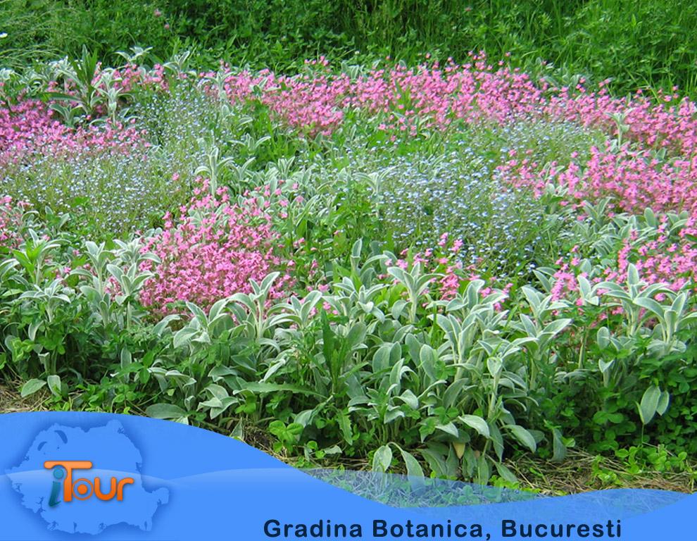 Gradina Botanica, Bucuresti