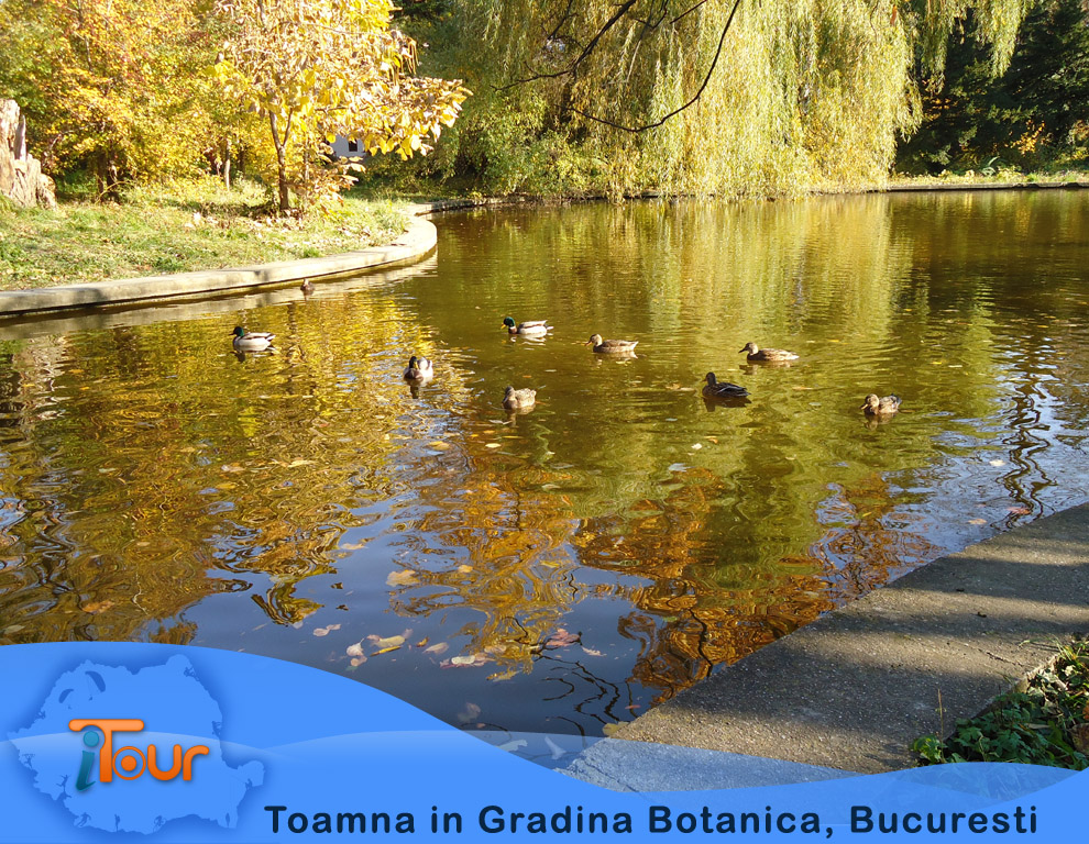 Toamna in Gradina Botanica, Bucuresti